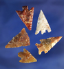 """Set of five arrowheads found near the Columbia River in nice condition, largest is 1""""."""