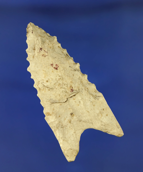 "2 1/8"" serrated classic Dalton made from Burlington chert found in Ralls Co., Missouri."