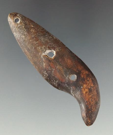 "Very rare! three hole 2 5/8"" split bear claw pendant found in southern Ohio."