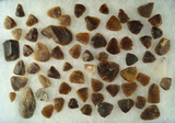 Large group of thumb scrapers, most are knife River Flint found in the Dakotas. Largest is 2 1/16