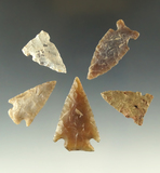 Set of five assorted arrowheads found in North Dakota, largest is 1 9/16