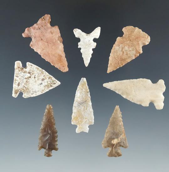 "Set of eight Arizona arrowheads, largest is 1 3/8""."