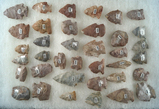 Group of approximately 37 Assorted Arrowheads and Hafted Scrapers made from Attica Chert.