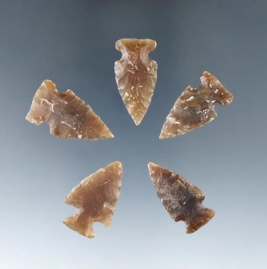 "Set of five Knife  River Flint arrowheads found in the Dakotas, largest is 1 1/16""."