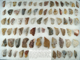 Large group of assorted Pipe Creek chert tools found in north central Ohio. Largest is 2 1/8