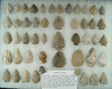 Set of 49 assorted arrowheads made from Bloomfield Chert found in north central Ohio.