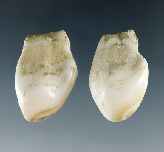 Pair of elk eye teeth (or wapiti whistlers) from the Dewey Schmid collection. Both around 1 1/8""