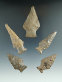 Set of five Ashtabula points found in New York, largest is 2 7/16