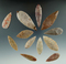 Set of 12 Neolithic African arrowheads found in Northern Sahara Desert Region. Largest is 2 13/16