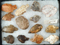Group of assorted Old World Neolithic Flint artifacts. Largest is 2 1/4