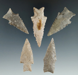 Ex. Museum! Set of five Zephyr points found in Texas, largest is 2 3/8