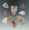 Set of eight Alibates Flint arrowheads from the Colorado area. Largest is 1 7/16