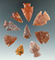 Set of nine nice arrowheads found in the Plains region, largest is 1 1/4