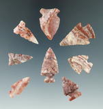 Set of eight Alibates Flint arrowheads found in the Colorado area, largest is 1 3/16