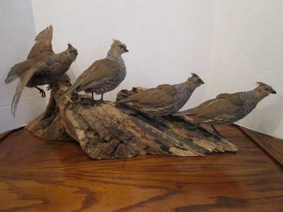Vintage Grouse Quartet on Driftwood Base Taxidermy Mount