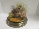 The Wildlife Collection, Inc. Full Body Quail Mount Taxidermy