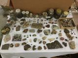 Big lot of various rocks, crystals, fossils, petrified wood, quartz, fossilized clams, and more