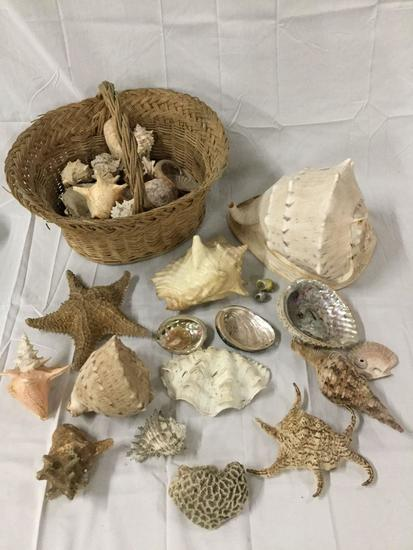 Basket of large seashells, coral and starfish