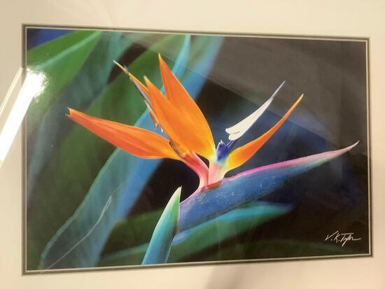 Framed photo print close-up of a Birds of Paradise flower signed by artist V.K. Tyler