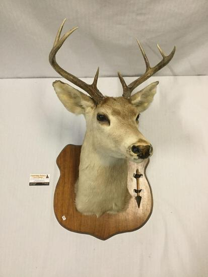 1970 taxidermy deer with antler rack mounted on wooden plaque w/ the arrow from original hunt, Nice!