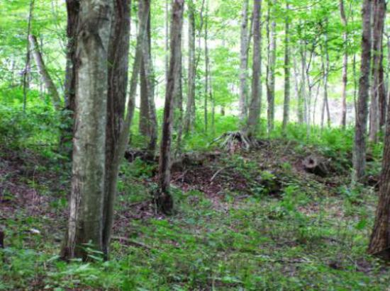 12.243 ACRE TRACT