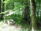 12.277 ACRE TRACT