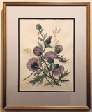Grieg Steiner Watercolor - Scottish Thistles, Signed Greig, Framed W/ Glass