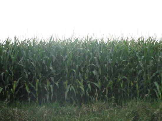 80+/- Acre Land  Auction * Cerro Gordo County