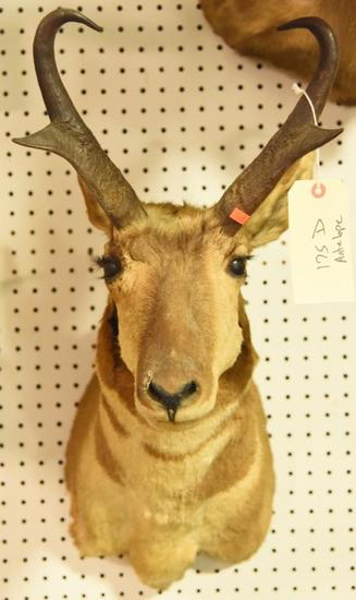 Antelope MountDue to the Size Item needs to be picked up at  the Auction Facility.