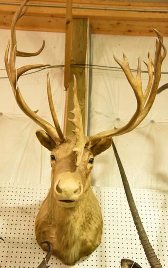 Caribou Mount in Boone & Crocket Book. Boone & Crockett will come with the mount.