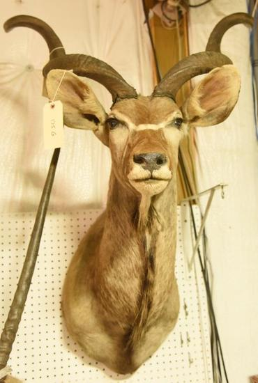 African Kudu Mount with removable antlersTHIS ITEM IS NOT SHIPPABLE. Due to the Size  Item nee