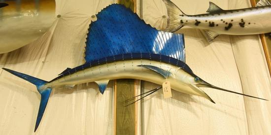 "Sail fish mount. Approx. 72"" in length THIS ITEM IS NOT SHIPPABLE. Due to the Size  Item needs"