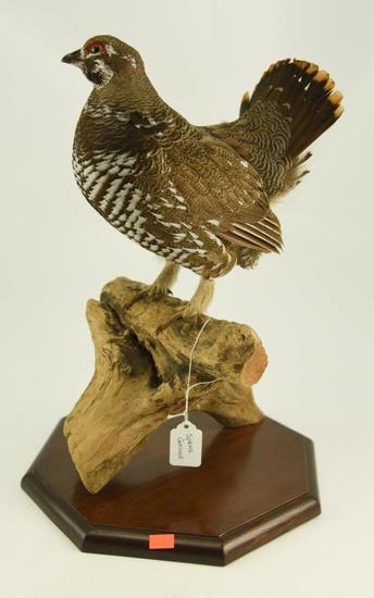 Lot #353D -Well executed Spruce Grouse on driftwood Taxidermy