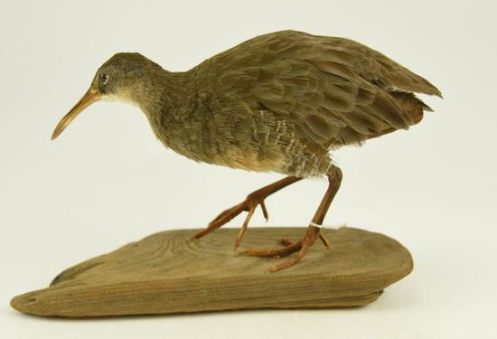 Lot #353E -Well executed Yellowlegs taxidermy mount