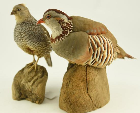 Lot #353F -Pair of Well executed Spruce Grouse mounted taxidermy