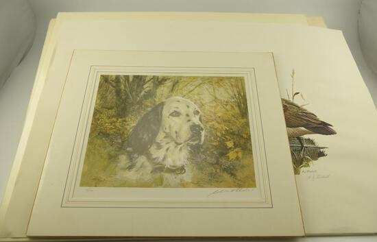 "(30) ""Yellow Labrador"" prints by James P. Fisher (24"" x 26""), matted print of ""English Setter"""