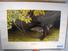 Ron Van Gilder Riverside Woodies, Print, No. 1279/1500, Signed, Framed