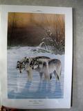 Winter Silence - Wolves, Thomas Moen, Print, Signed, No. 13/6000
