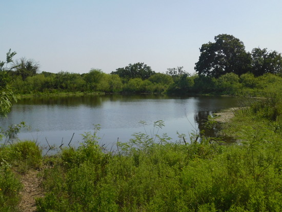 1213 PR 4486 GIDDINGS TEXAS APPX. 58.43 ACRES RANCH LAND
