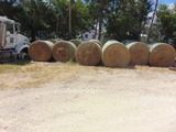 *NOT SOLD*ROUND HAY BALES 5.4 X 5.5