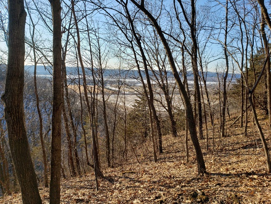 94 Wooded Acres