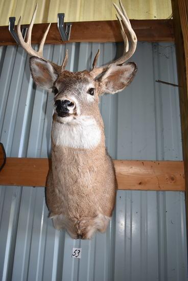 "8 Point Buck Deer Mount, 16"" Spread."