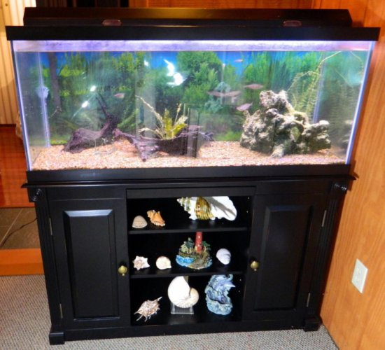 Fresh Water Aquarium and Stand, Larger