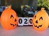 """Pair of Jack-O-Lanterns, electric, approx. 21"""" tall"""