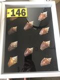 Shadow box of sea shells  NO SHIPPING