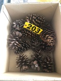 Crafting pine cones  NO SHIPPING