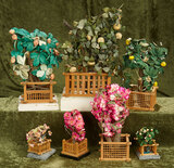 Lot of Japanese miniature trees for display $100/300