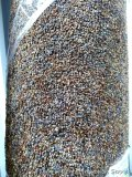 South Wind carpet remnant, 12' x 15'. Please come to open house to see the color.