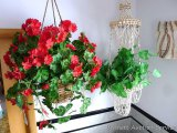 Funky plant hanger made of sea shells hangs approx. 3'; Faux geranium hanging basket.