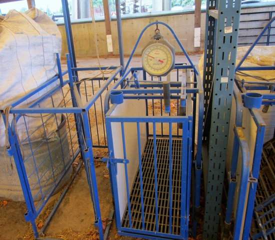 Marweld Sheep Handling Sorting Cage & Scale!
